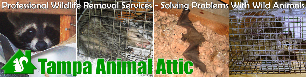 Riverview Animal Attic